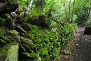 Path near Lynton, England